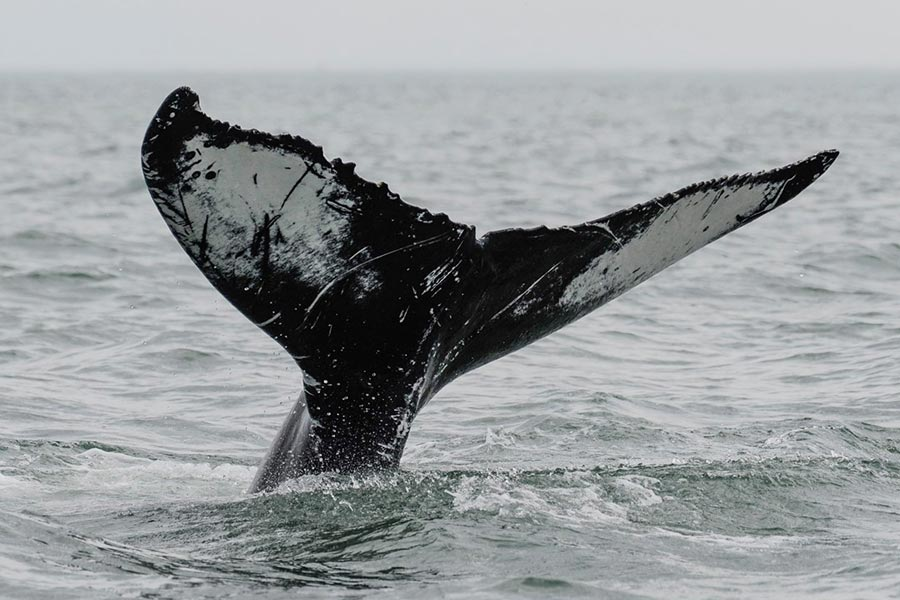 Virginia Aquarium and Marine Science Center Whale Watch